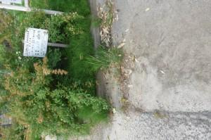 森合運動公園P1000405
