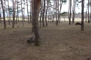 猪苗代町昭和の森P1050831