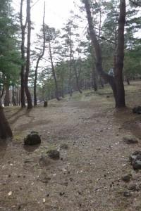 猪苗代町昭和の森P1050833