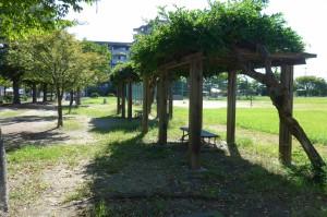 野田中央公園P1010316