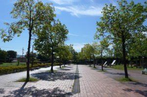 野田中央公園P1010323